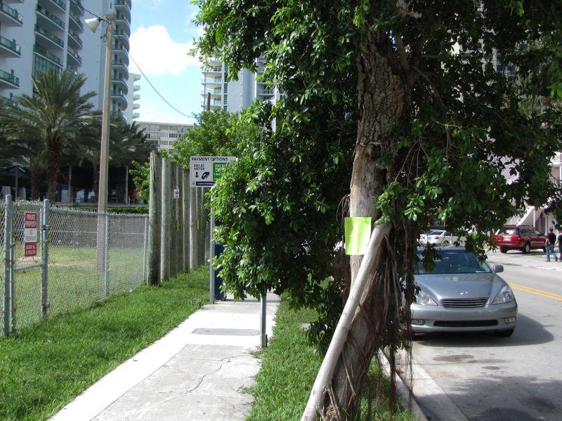 Brickell tree00 tdk