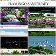 Pink flamingos hialeah 06192014
